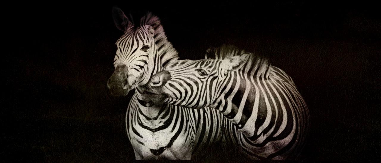 Forti e Coraggiose Zebre